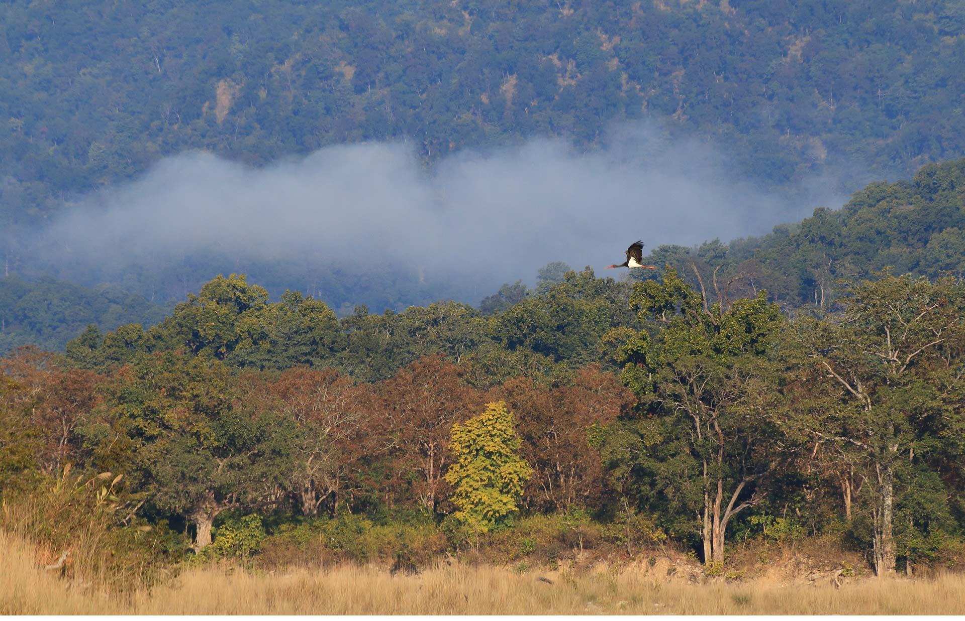 http://www.thegreatnext.com/Corbett Safari Bengal Tiger Wildlife Adventure Kumaon Uttarakhand Garhwal Nature