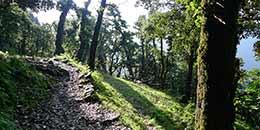 /Nagtibba Trek Uttarakhand Trekking Camping Dehradun