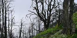 http://m.thegreatnext.com/Nagtibba Trek Uttarakhand Trekking Camping Dehradun