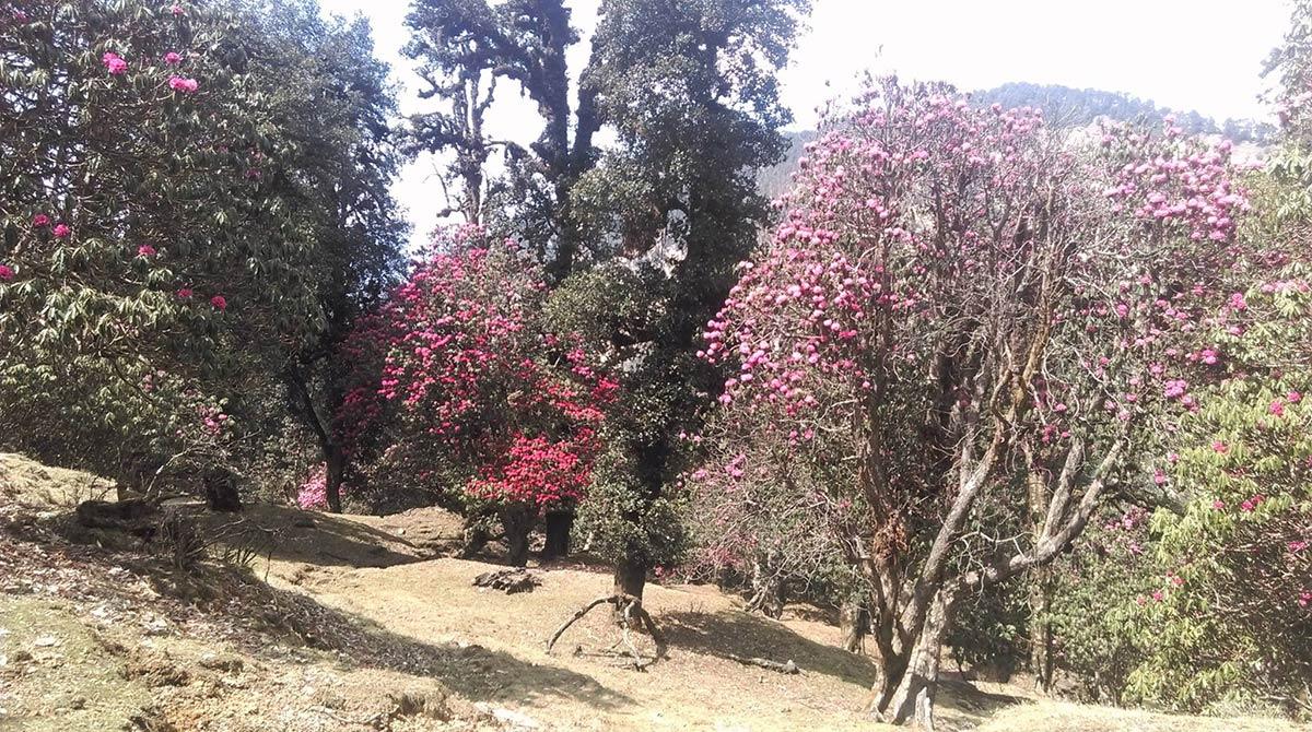 http://m.thegreatnext.com/Chopta Chandrashila Tungnath Deoriatal Trek Uttarakhand Adventure Summer Trek Camping