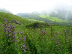 http://m.thegreatnext.com/Trekking Valley Of Flowers Uttarakhand Adventure Travel The Great Next