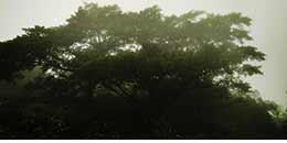 http://www.thegreatnext.com/Andharban Trek Maharashtra Monsoon Trek Sahyadri Forests