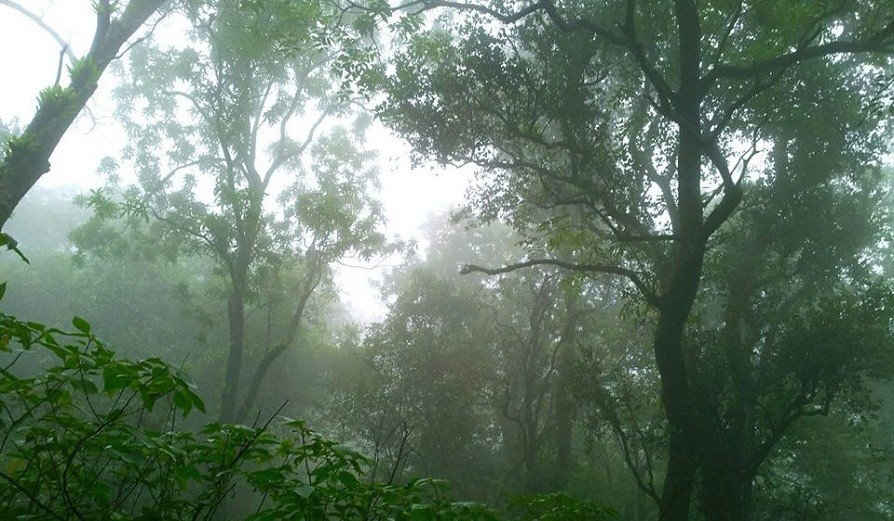 http://www.thegreatnext.com/Bhimashankar Monsoon Trek Maharashtra Trekking Adventure Activity Sports Fun Nature Mountains