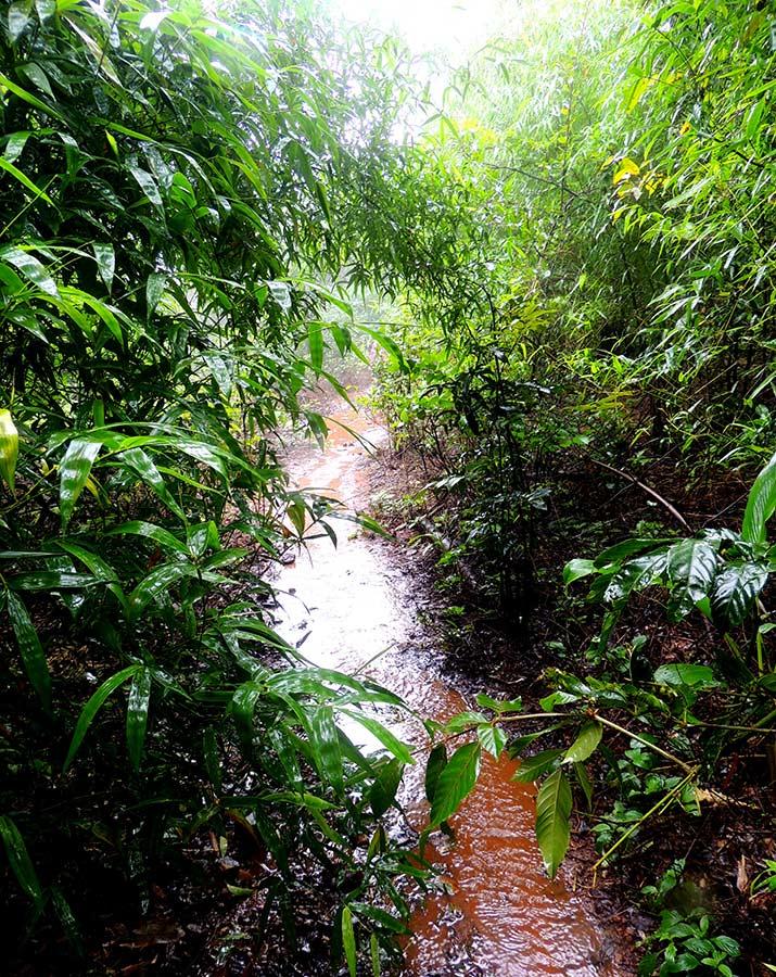 http://www.thegreatnext.com/Andharban Trek Maharashtra Monsoon Trek Sahyadri Forests The Great Next