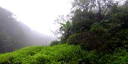 http://www.thegreatnext.com/Andharban Trek Maharashtra Monsoon Trek Sahyadri Forests The Great Next