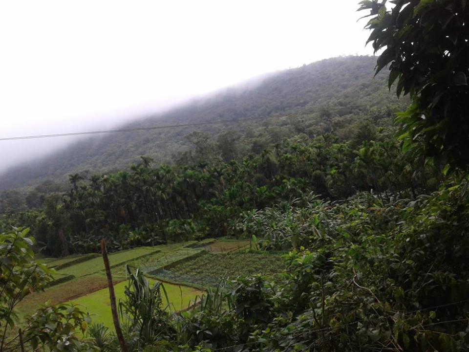 http://www.thegreatnext.com/Kodachadri Trek Kayaking Bangalore Monsoon Trek Sahyadri Forests The Great Next