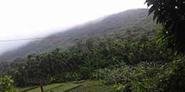 http://www.thegreatnext.com/Kodachadri Trek Kayaking Bangalore Monsoon Trek Sahyadri Forests The Great Next