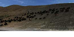 http://m.thegreatnext.com/Spiti Valley Tour Ki Monastery Hikkim Komik Chandratal Lake Kaza Manali Road Trip The Great Next