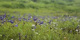 http://www.thegreatnext.com/Kaas Plateau Satara Maharashtra Monsoon Trek Sahyadri Valley of Flowers The Great Next