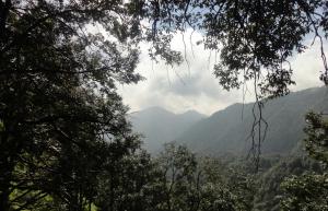 Trek in Binog Wildlife Sanctuary