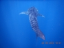 http://www.thegreatnext.com/Andaman Islands Scuba Diving Adventure PADI Open Water Diver OWD Course Havelock