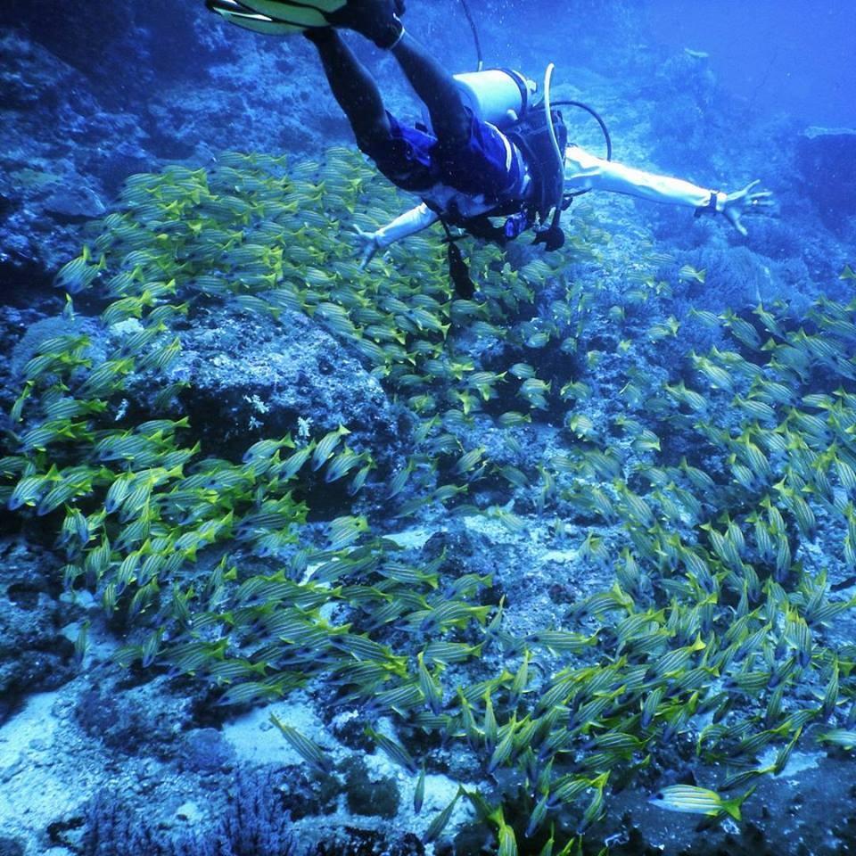 http://www.thegreatnext.com/Scuba Diving Nemo Beach Havelock Andaman Nicobar Adventure