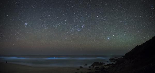 Bioluminescence night kayaking in Havelock
