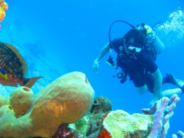 Discover Scuba Diving (shore) in Havelock Island