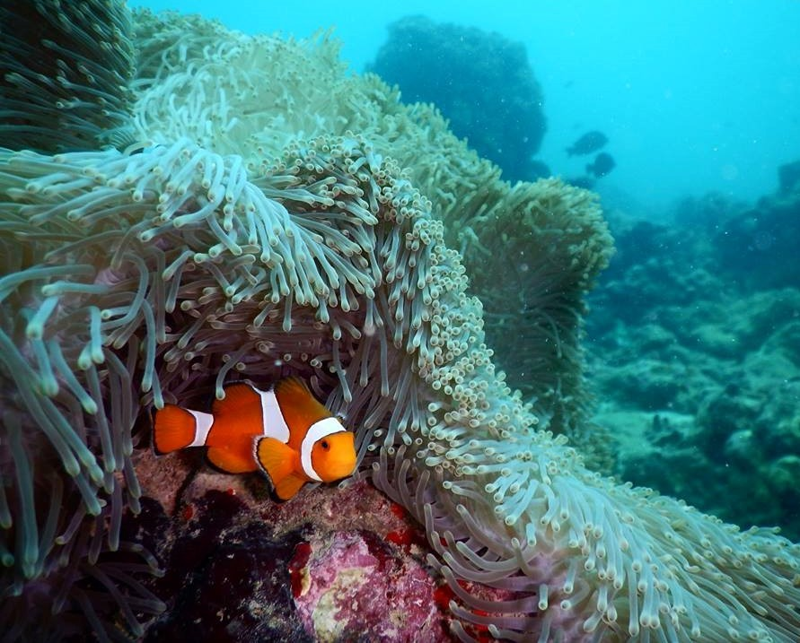 http://m.thegreatnext.com/Scuba Diving Nemo Beach Havelock Andaman Nicobar Adventure