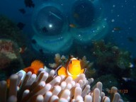 http://m.thegreatnext.com/Sea Walking North Bay Port Blair Havelock Andaman Nicobar Underwater Adventure Activity Travel Marine life