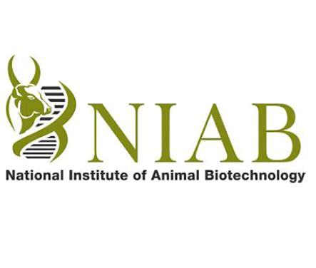 Junior Research Fellowship, NIAB Hyderabad 2019