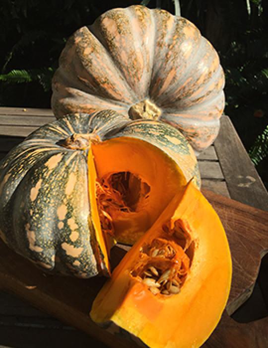 Pumpkin 500 Gm (कद्दू - કોળું)