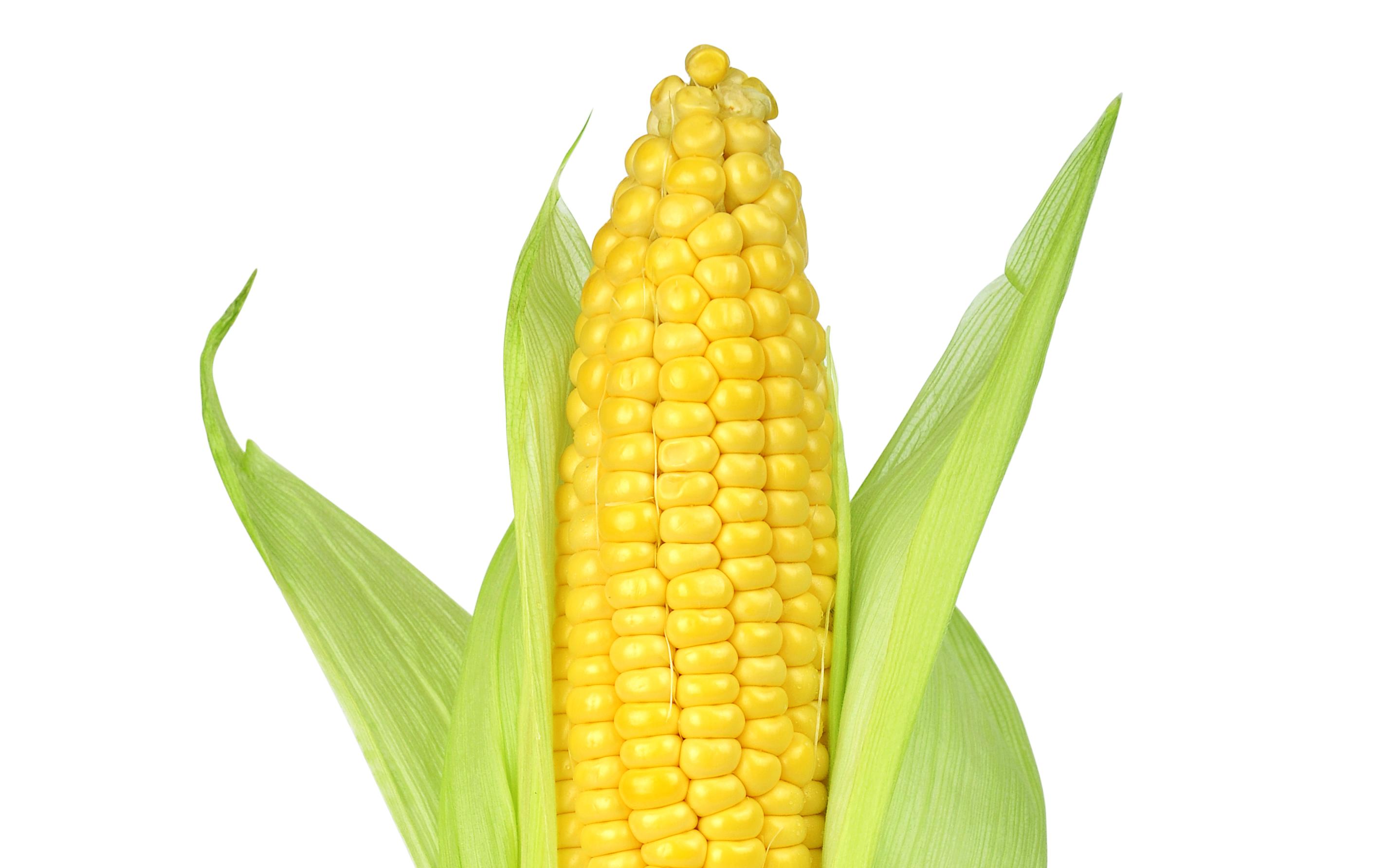 Sweet Corn 1 Pc (मकई - મકાઈ)