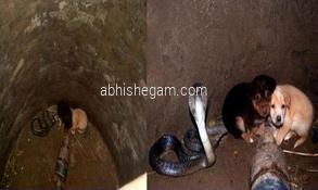 snake saved puppy dog life miracle incident