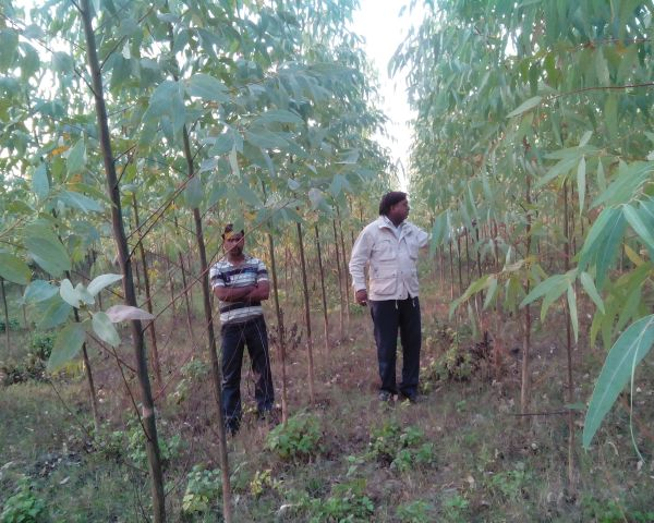 Big Income From Your Agri Land In Village Start Today 100