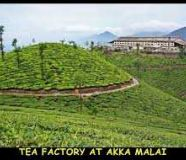 Rs 250 cr Well maintained tea estate for sale at Waynad