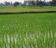 Agriculture land sale old note \\\'s are acceptable