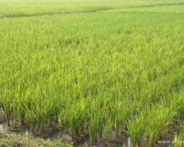 Agriculture Land For 10 Lakhs Acre Is Sale Agriculture Land for Sale