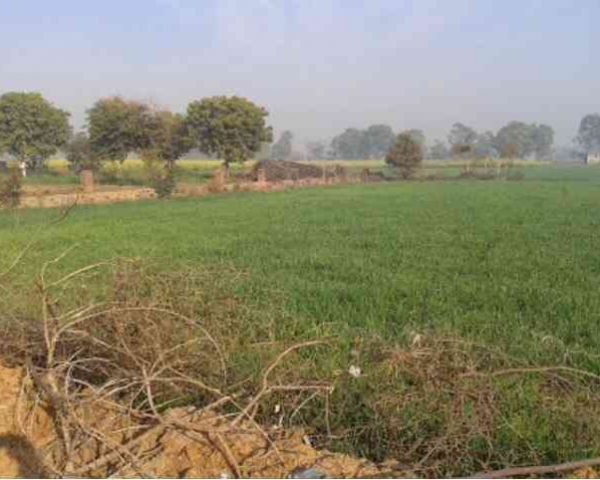 Agriculture Land For 10 Lakhs Acre Is Sale Agriculture Land