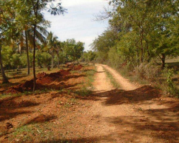 5 Acres Coconut Farm Land Available In Agriculture Land for Sale