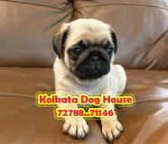 Ready Stock All Types of Puppies for sale With a...