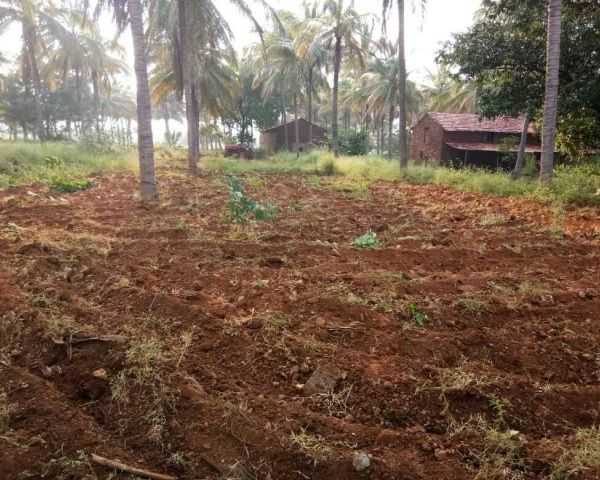 5 5 Acre Coconut Arecanut Land Agriculture Land for Sale