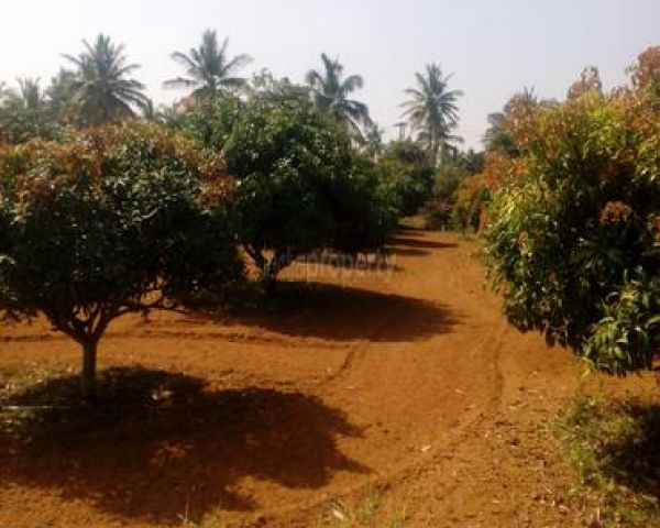 Agricultural Land For Sale At Hoskote, Bangalore