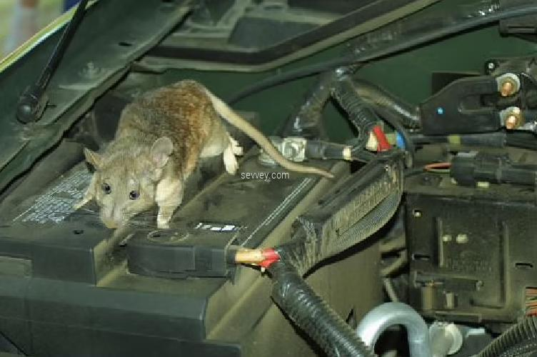 car rat engine