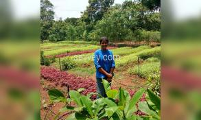 chennai agri land village