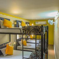 8 bed mix dorm in jodhpur hostel