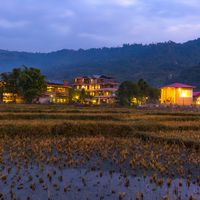 Paddy field view from Zostel Pokhara