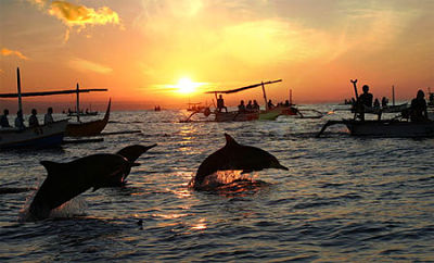 dolphins-trips-at-sinquerim-beach,-goa-2_opt