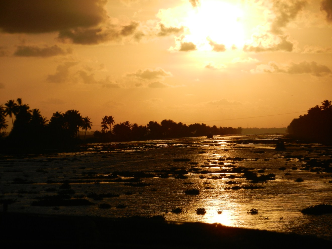Alleppey sunset