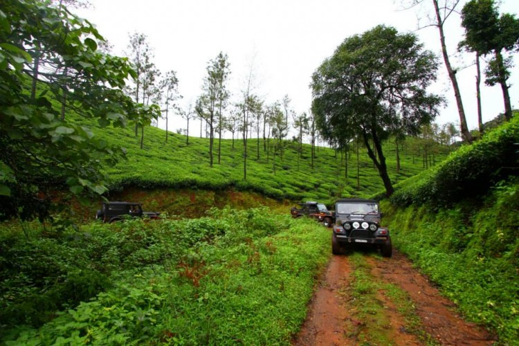 Driving through the coffee plantations
