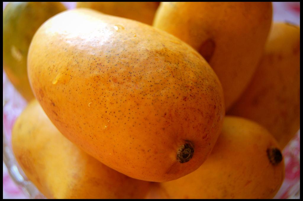 bulk alphonso mango 5