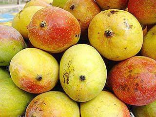 chausa-mangoes-135080