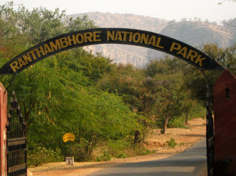 ranthambore_national_park_live9