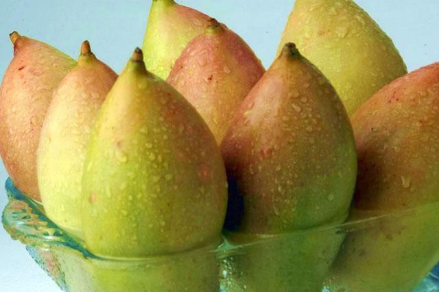 totapuri-mango