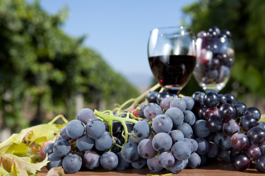 1328371705wine-grapes
