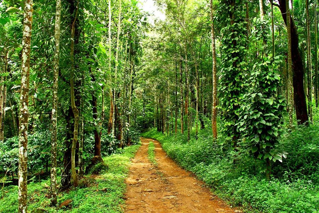 plantation-coffeaaoma