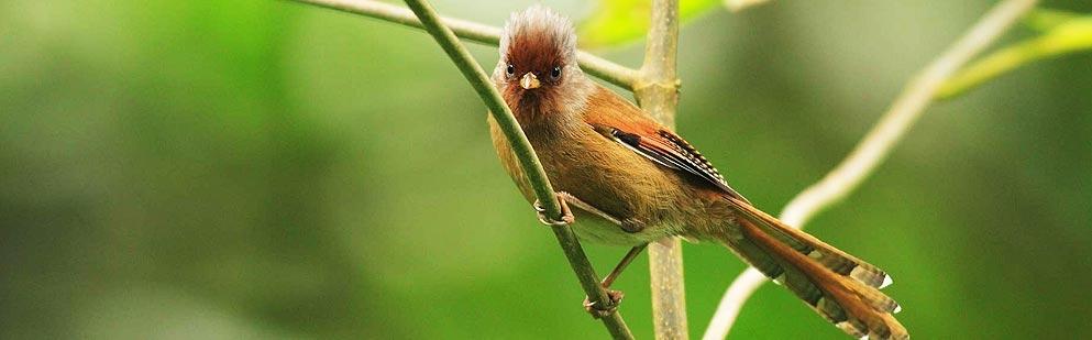 Karnala Bird
