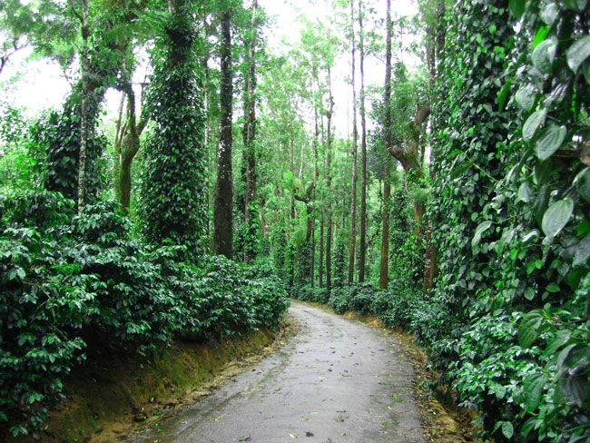 zoomcar.com - Coorg