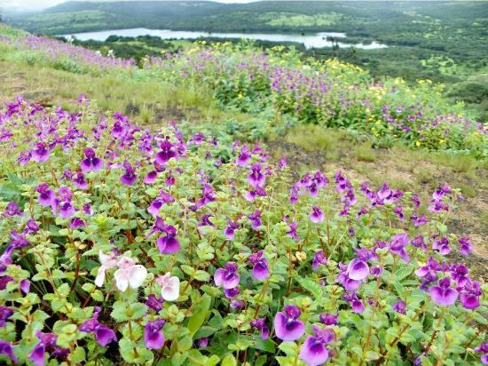 zoomcar.com - Valley of Flowers