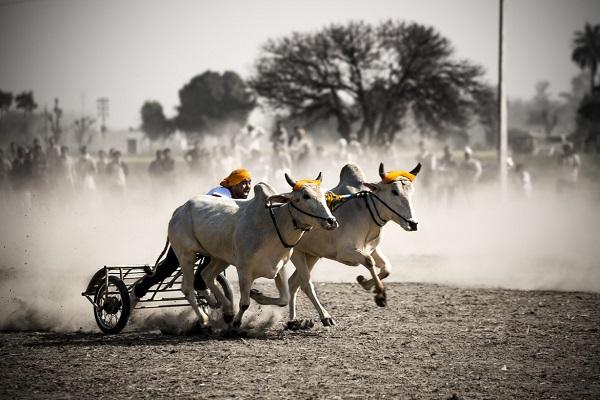 zoomcar.com - Kila Raipur sports festival